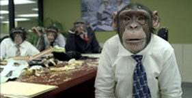 Chimpanzees in CareerBuilder TV commercial