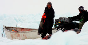 Sealers collect slaughtered baby seals