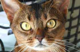 Rush Limbaugh's cat Punkin