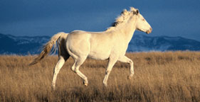 Wild horse running in field