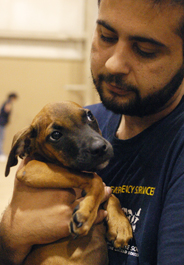 Puppy carried by HSUS staff