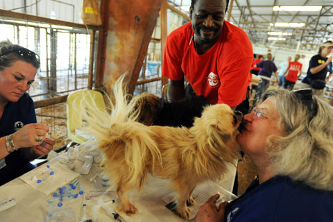 Dog rescued from Texas puppy mill receives care at temporary shelter