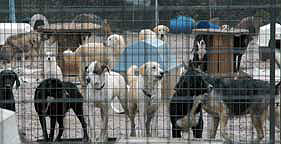 Dogs crowded at Every Dog Needs a Home in Arkansas in 2005