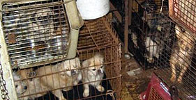 Johnson County, Arkansas puppy mill