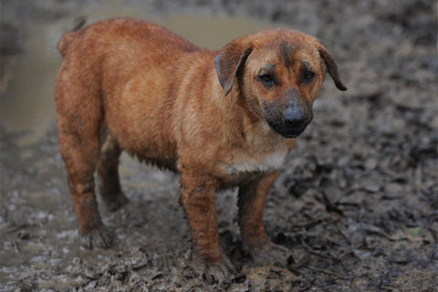 The HSUS helped rescue 180 dogs and three cats in Preston, Mississippi on March 9