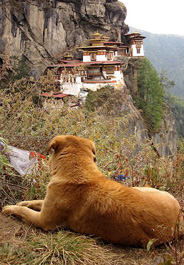Street dog near Tiger's Nest monastery in Bhutan