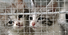 Two kittens in cage