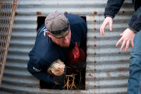 Chicken rescued from Waltonsburg, N.C. property by The Humane Society of the United States and Greene County Animal Control