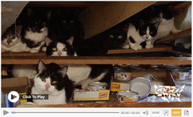 See video from the rescue of 120 cats from an alleged hoarding situation