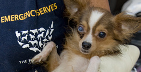One of more than 100 dogs rescued from a Carriere, Miss. puppy mill