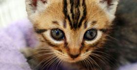 281x144_cat_kitten2_iStock