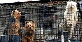 "One of Missouri's ""Dirty Dozen,"" this puppy mill has a history of problems"