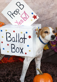 Dog supports Missouri's YES! on Prop B campaign
