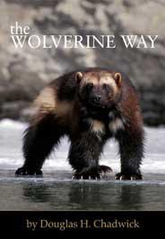 The Wolverine Way by Doug Chadwick