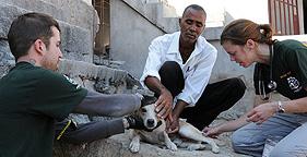 Chris Broughton leads Humane Society International's animal protection efforts in Haiti