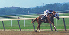 Secretariat en route to winning the 1973 Belmont Stakes
