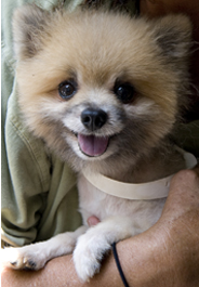 Rescued puppy mill dog