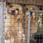 Dogs rescued from puppy mill by The HSUS