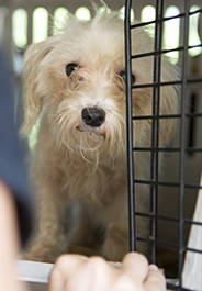 Dog rescued from puppy mill