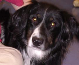 Adopted dog Leo