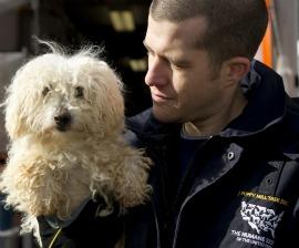 Dog surrendered by Missouri breeder