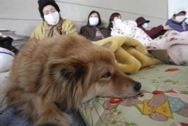 A family and their dog after the earthquake in Japan