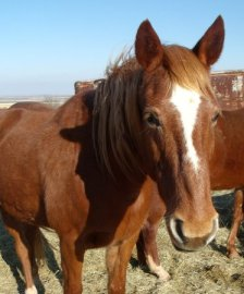 Horse named Elvis rescued by Blaze's Tribute Equine Rescue in Oklahoma