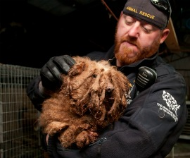 Severely matted dog rescued from a Tennessee puppy mill by The HSUS