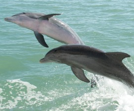 Two dolphins by Pete Markham, via Flickr