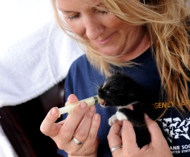 HSUS's Inga Gibson feeds a kitten rescued from Alabama tornadoes in 2011
