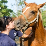 Horse helped by The HSUS after Hurricane Irene