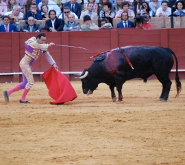 Bullfight in Spain - Help end bullfighting