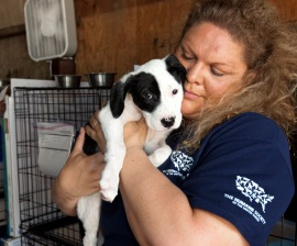 HSUS's Darci Adams with a dog at our Mississippi emergency shelter