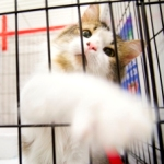 Rescued cat in crate at emergency shelter in Florida