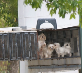 Dogs at a puppy mill linked with the online broker Purebred Breeders
