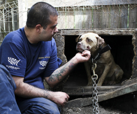 The HSUS rescuing 20 dogs from a suspected dogfighting operation in Indiana