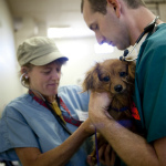 An HSVMA field clinic helping pets in Nevada