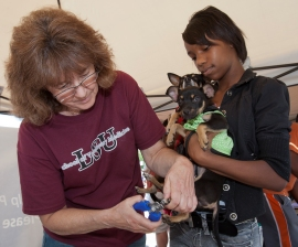 LSU vet school volunteer trimming dogs' nails at an HSUS Building Humane Communities clinic in Louisiana