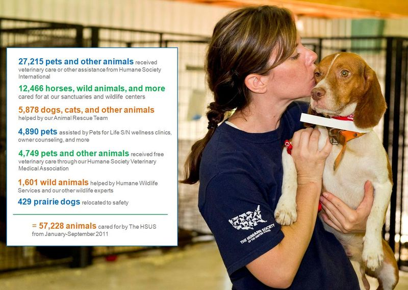 HSUS's direct care for animals in first three quarters of 2011