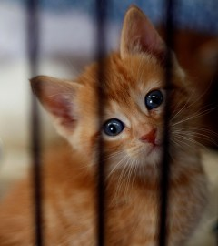 Orange kitten in a crate