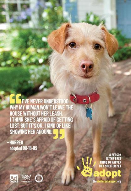 Harper1 shelter pet project ad 2011