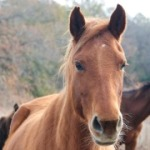 Rescued horses - Kathy Milani/The HSUS