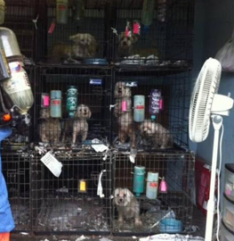North Carolina puppy mill