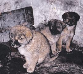 1990s dog and cat fur investigation in China