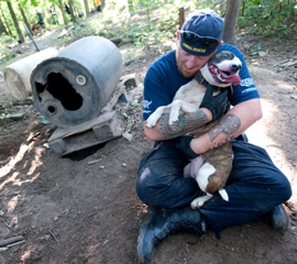 Michigan dogfighting rescue