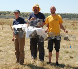 HSUS staff helping with prairie dog relocation in South Dakota