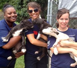 Puppies rescued from a puppy mill in Wilson County, N.C.