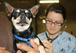 dog examined at prior clinic