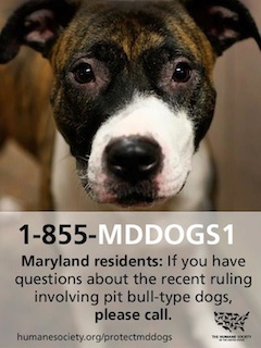 Md pit bulls graphic