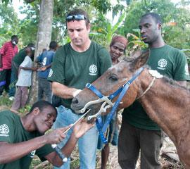 Haiti-vets-horse270x240